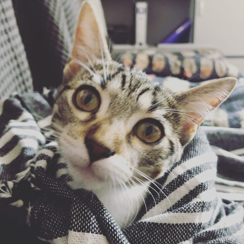 Mila the Kitty